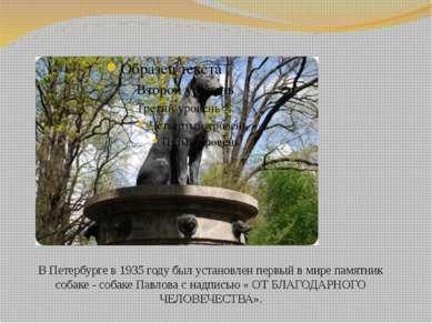 В Петербурге в 1935 году был установлен первый в мире памятник собаке - собак...