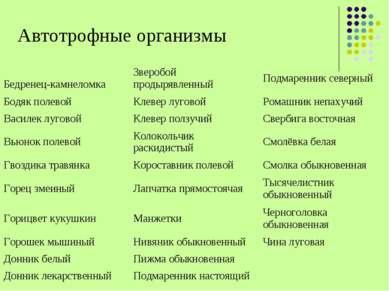 Автотрофные организмы Бедренец-камнеломка Зверобой продырявленный Подмаренник...