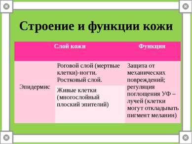 Строение и функции кожи Слой кожи Функция Эпидермис Роговой слой (мертвые кле...
