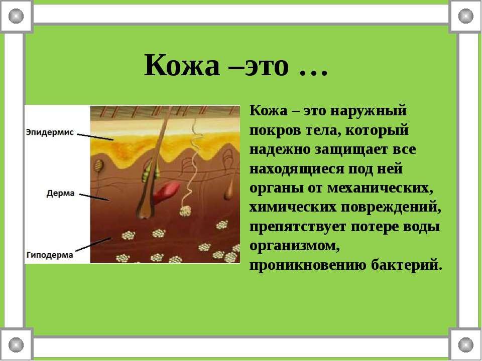 Кожа –это … Кожа – это наружный покров тела, который надежно защищает все нах...