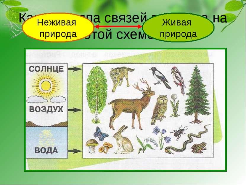 Какая группа связей показана на этой схеме? Неживая природа Живая природа
