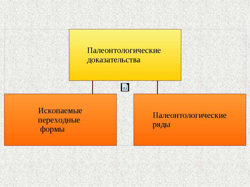 Ископаемые переходные формы Ископаемые переходные формы – формы организмов, с...