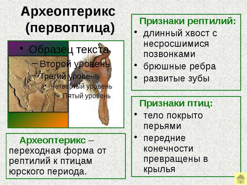 Палеонтологические ряды Палеонтологические ряды – это ряды ископаемых форм, с...
