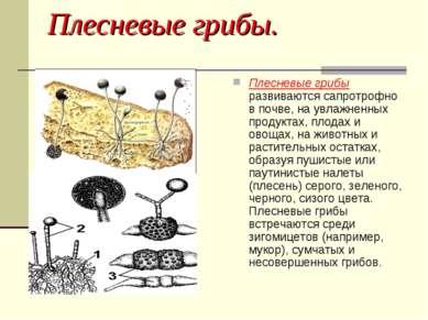 Плесневые грибы. Плесневые грибы развиваются сапротрофно в почве, на увлажнен...