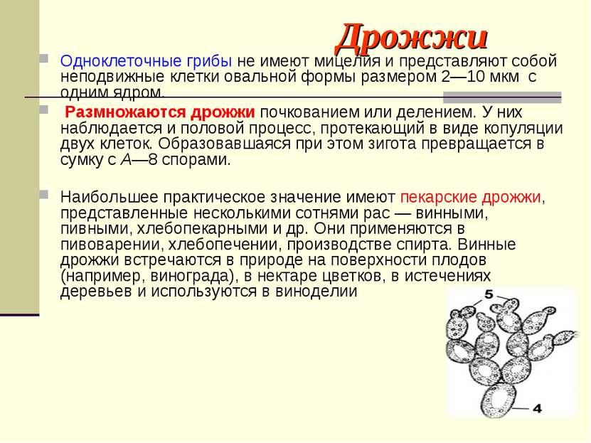 Дрожжи Одноклеточные грибы не имеют мицелия и представляют собой неподвижные ...