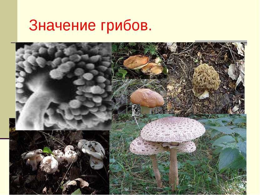 Значение грибов.
