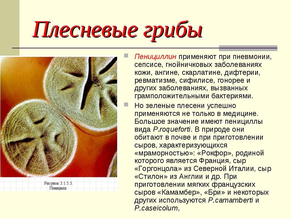 Плесневые грибы Пенициллин применяют при пневмонии, сепсисе, гнойничковых заб...