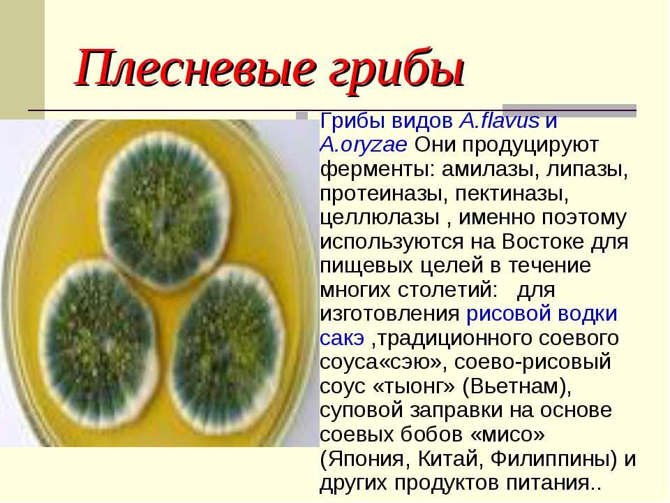Плесневые грибы Грибы видов A.flavus и A.oryzae Они продуцируют ферменты: ами...