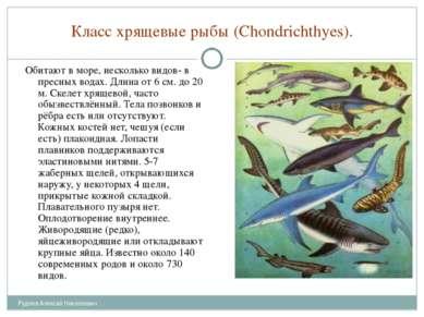 Класс хрящевые рыбы (Chondrichthyes). Обитают в море, несколько видов- в прес...