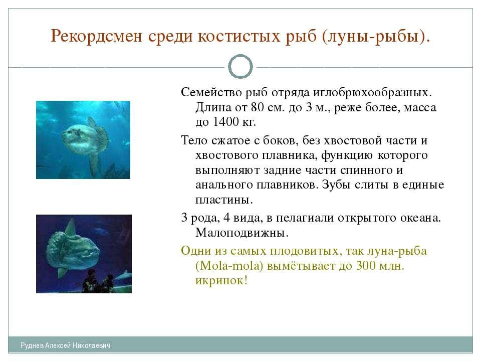 Рекордсмен среди костистых рыб (луны-рыбы). Семейство рыб отряда иглобрюхообр...