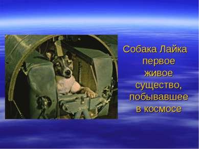 Собака Лайка первое живое существо, побывавшее в космосе
