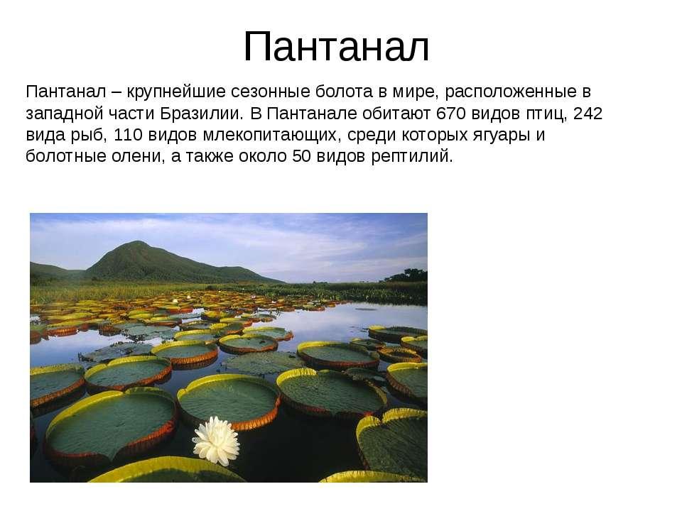 Пантанал Пантанал – крупнейшие сезонные болота в мире, расположенные в западн...