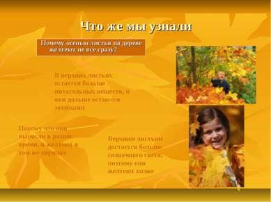 Что же мы узнали Почему осенью листья на дереве желтеют не все сразу? Потому...