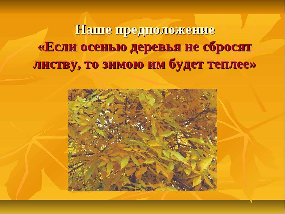 Наше предположение «Если осенью деревья не сбросят листву, то зимою им будет ...