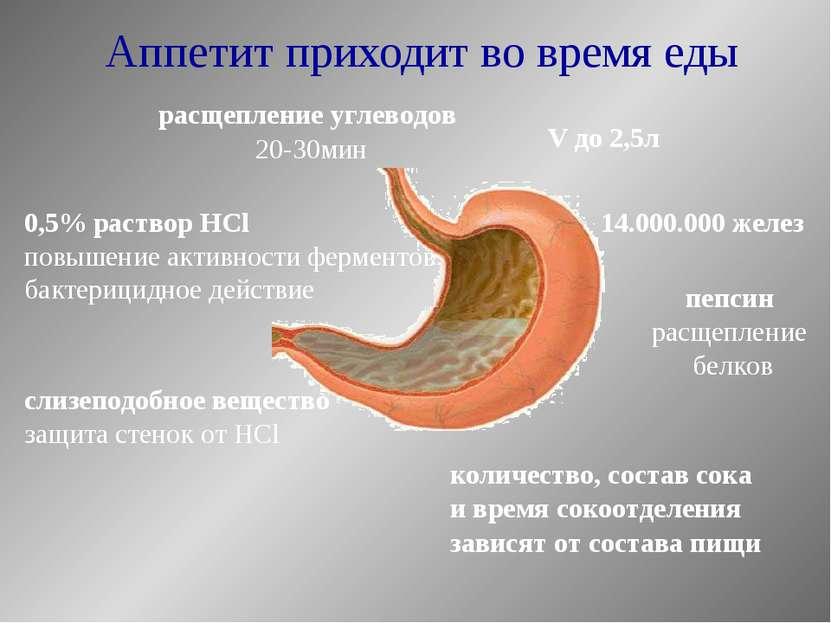 Аппетит приходит во время еды V до 2,5л 14.000.000 желез расщепление углеводо...