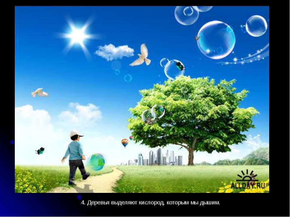 4. Деревья выделяют кислород, которым мы дышим.