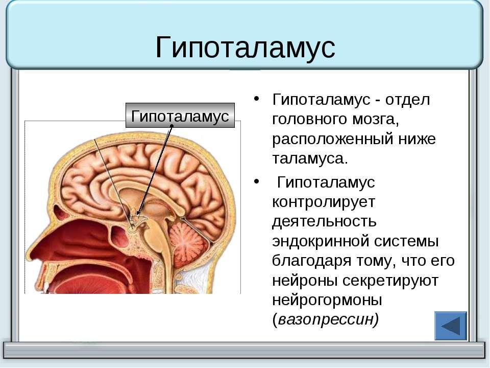 покрытие какие гормоны вырабатывает головной мозг выбор свитшотов