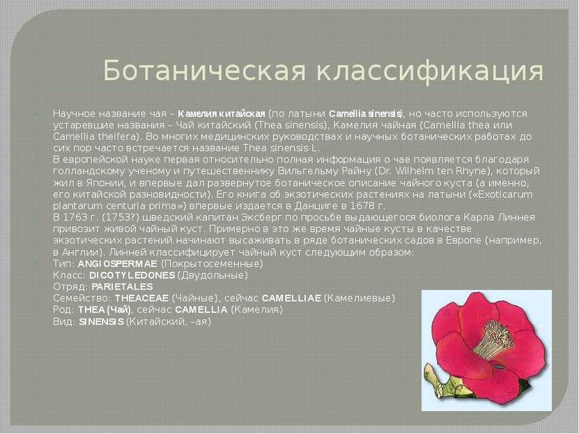 Ботаническая классификация Научное название чая – Камелия китайская (по латын...