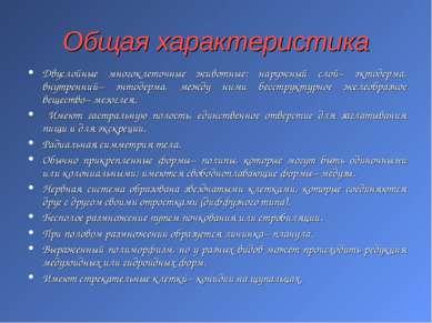 Общая характеристика Двуслойные многоклеточные животные: наружный слой– эктод...