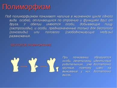 Полиморфизм Под полиморфизмом понимают наличие в жизненном цикле одного вида ...
