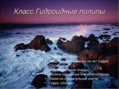 Класс Гидроидные полипы Доминирует полип Медуза простая, ингода ее нет (гидра...