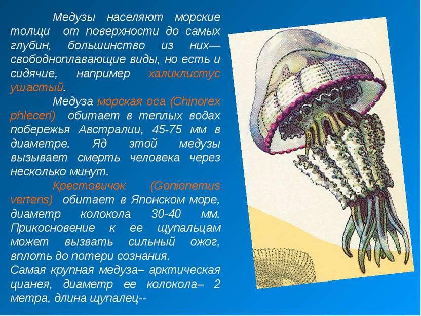 Медузы населяют морские толщи от поверхности до самых глубин, большинство из ...