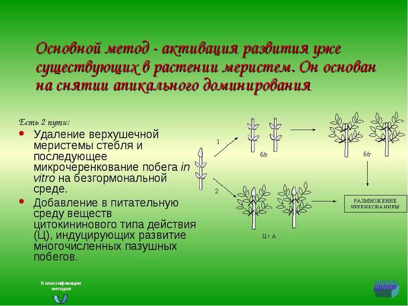 Основной метод - активация развития уже существующих в растении меристем. Он ...