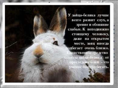 Поведение зайца-беляка Эти животные ведут одиночный образ жизни. Активность з...