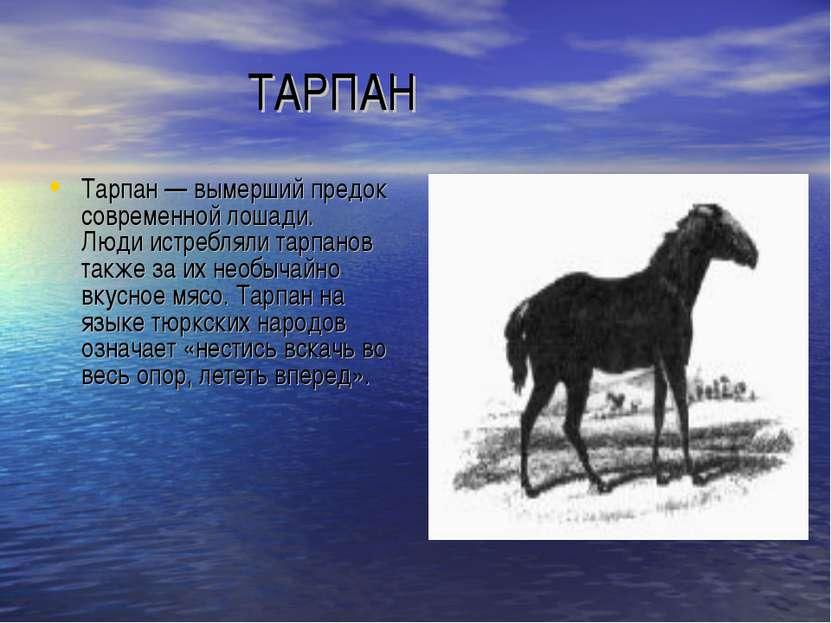 ТАРПАН Тарпан — вымерший предок современной лошади. Люди истребляли тарпанов ...