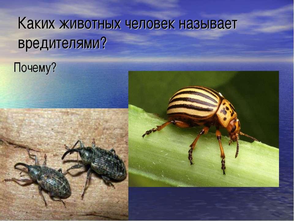 Каких животных человек называет вредителями? Почему?