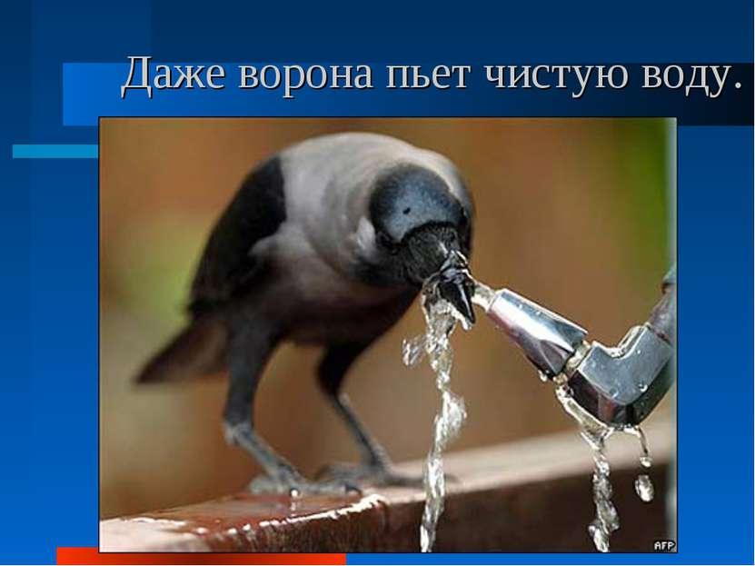 Даже ворона пьет чистую воду.