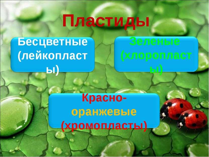 Пластиды Бесцветные (лейкопласты) Зеленые (хлоропласты) Красно-оранжевые (хро...