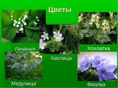 Цветы Ландыши Хохлатка Кислица Медуница Фиалка