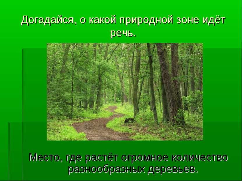 Догадайся, о какой природной зоне идёт речь. Место, где растёт огромное колич...