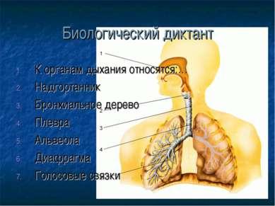 Биологический диктант К органам дыхания относятся:… Надгортанник Бронхиальное...