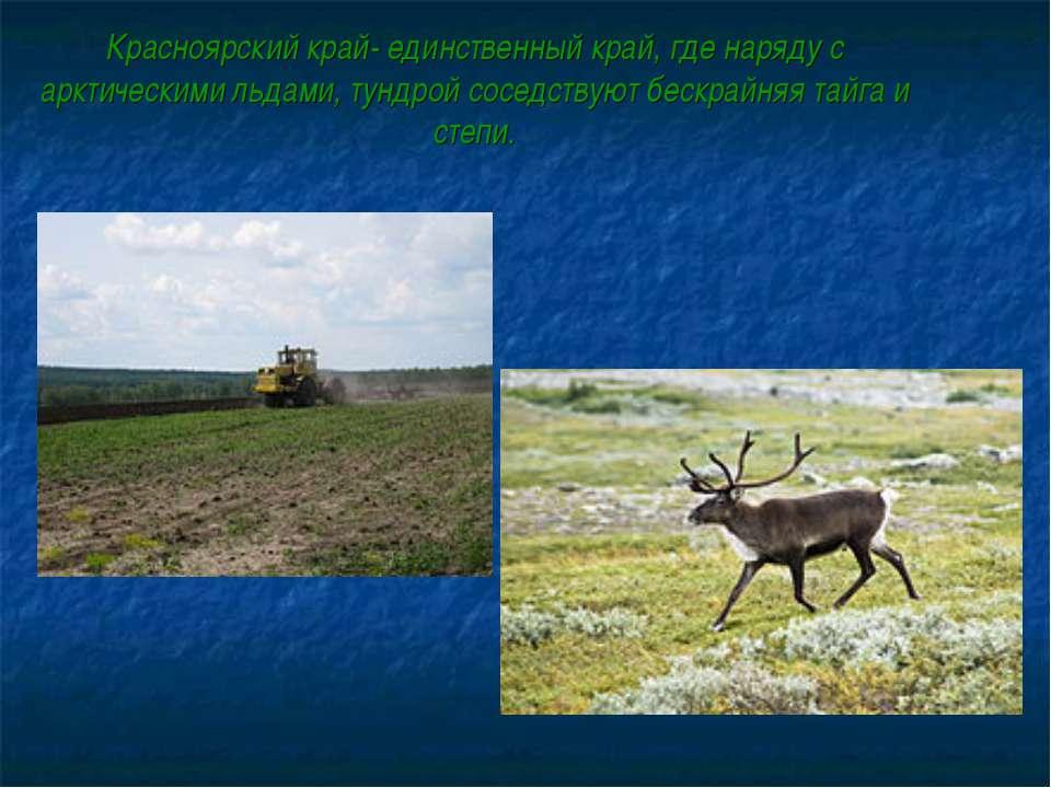 Красноярский край- единственный край, где наряду с арктическими льдами, тундр...