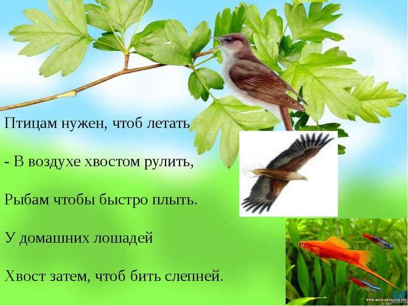 Птицам нужен, чтоб летать - В воздухе хвостом рулить, Рыбам чтобы быстро плыт...
