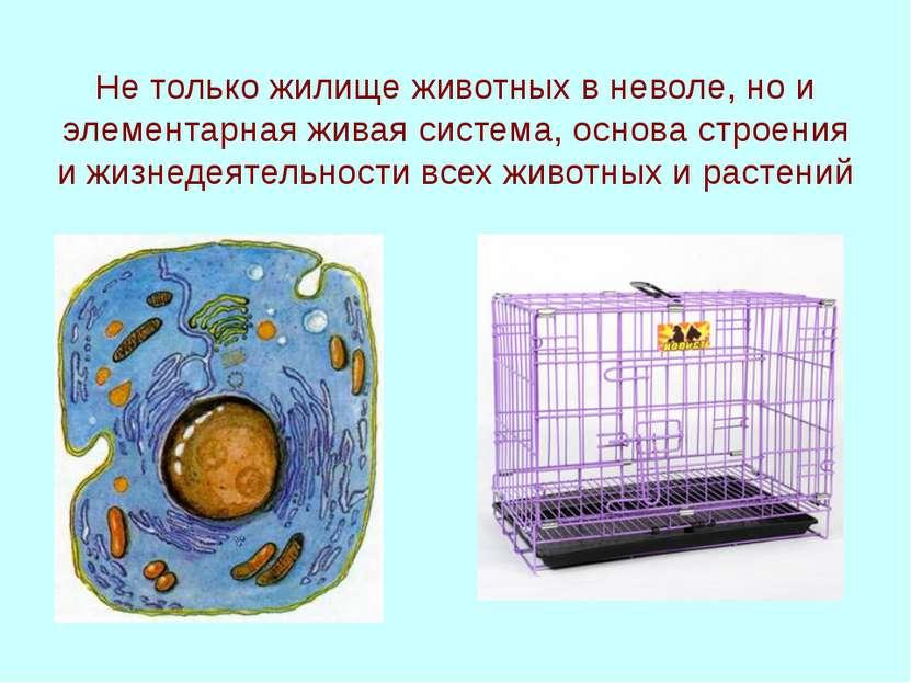 Не только жилище животных в неволе, но и элементарная живая система, основа с...