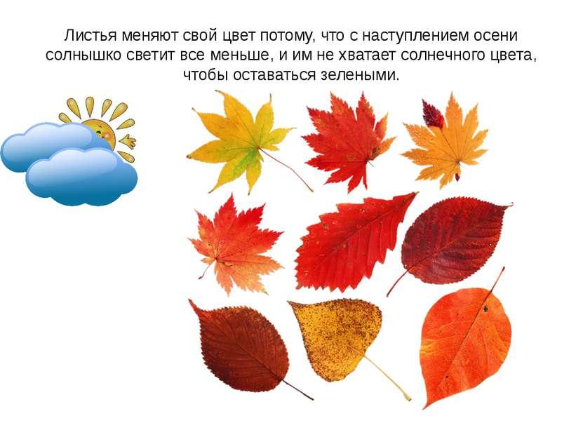 Листья меняют свой цвет потому, что с наступлением осени солнышко светит все ...