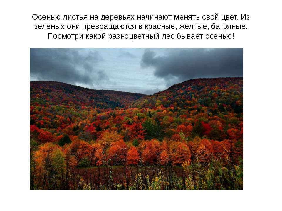 Осенью листья на деревьях начинают менять свой цвет. Из зеленых они превращаю...