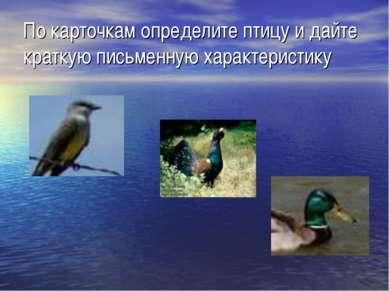 По карточкам определите птицу и дайте краткую письменную характеристику