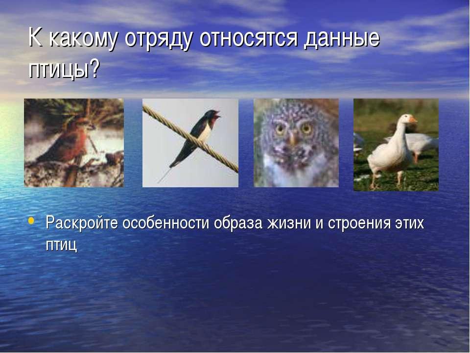 К какому отряду относятся данные птицы? Раскройте особенности образа жизни и ...