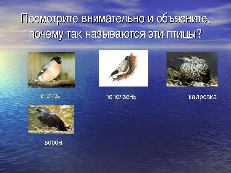 Посмотрите внимательно и объясните, почему так называются эти птицы? снегирь ...