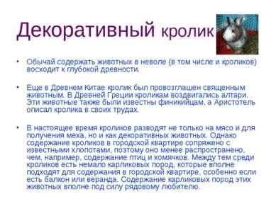 Декоративный кролик Обычай содержать животных в неволе (в том числе и кролико...