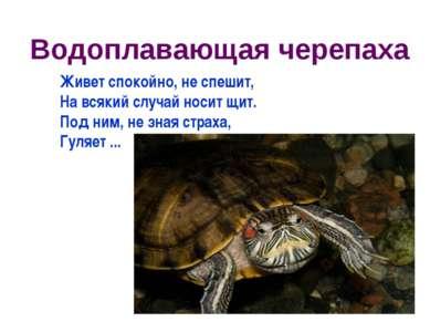 Водоплавающая черепаха Живет спокойно, не спешит, На всякий случай носит щит....