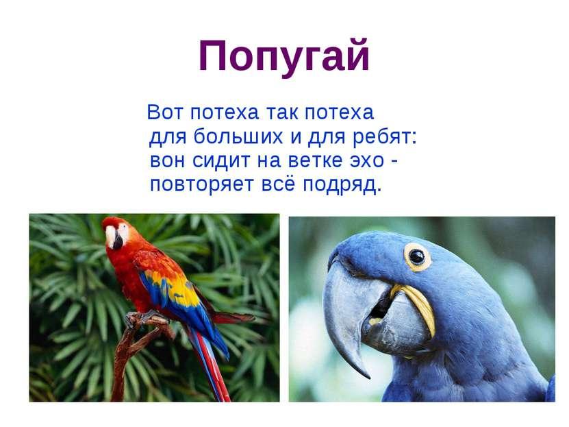 Попугай Вот потеха так потеха для больших и для ребят: вон сидит на ветке э...