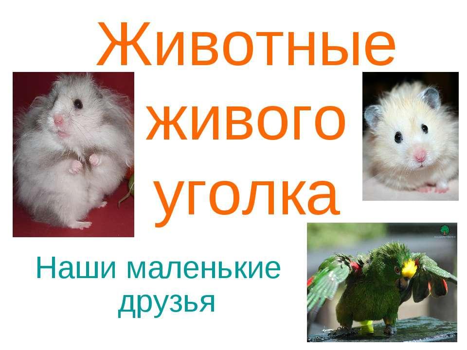 Животные живого уголка Наши маленькие друзья