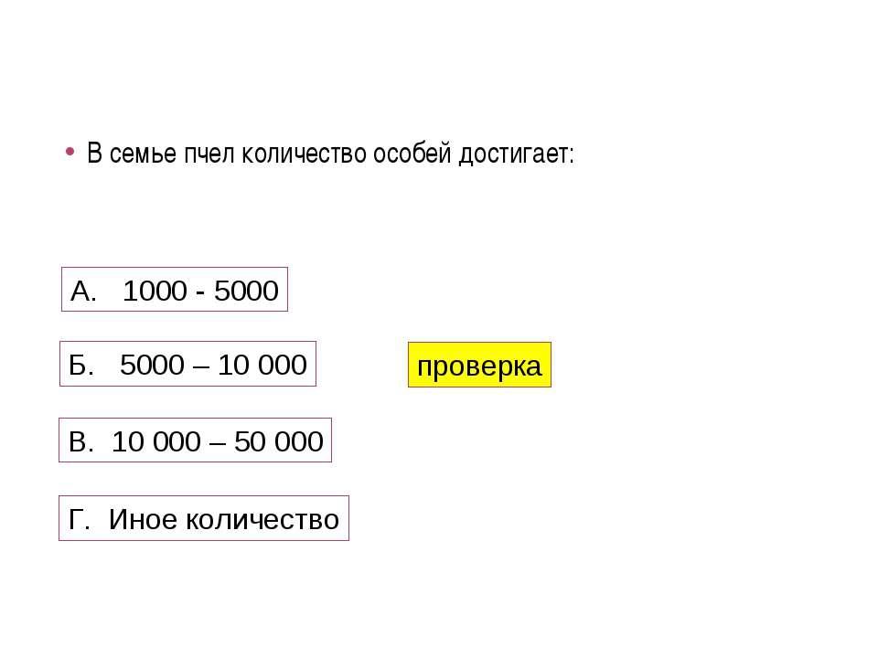 В семье пчел количество особей достигает: А. 1000 - 5000 Б. 5000 – 10 000 В. ...