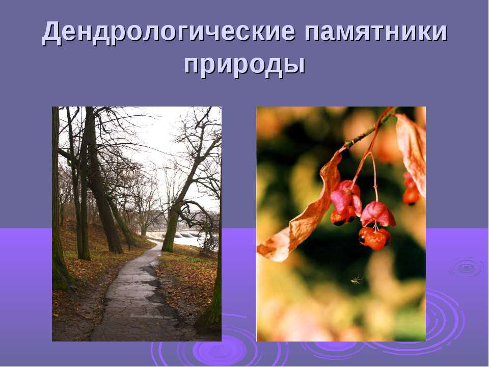 Дендрологические памятники природы