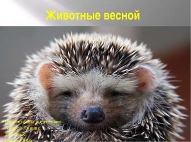 Животные весной Презентацию подготовил Андрей Линник 2 В класс Школа 2006